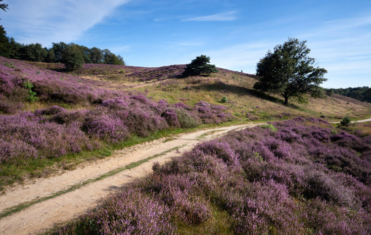 National Parc De Maasduinen
